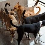 10 лева на място глобяват по новата наредба за бездомните кучета