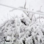 Жълт код за сняг, виелици и поледици за утре в Плевен