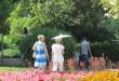 Жегите извадиха като аксесоар чадърите против слънце