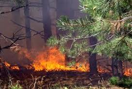горски пожари_опасност