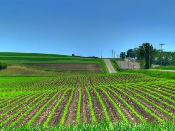 ниви - земя
