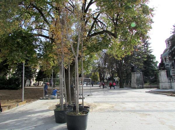 нови дървета