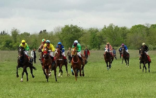 конно състезание Горни Дъбник