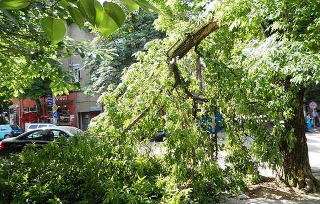 паднало дърво 1