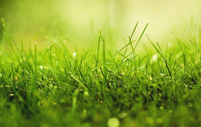росна трева
