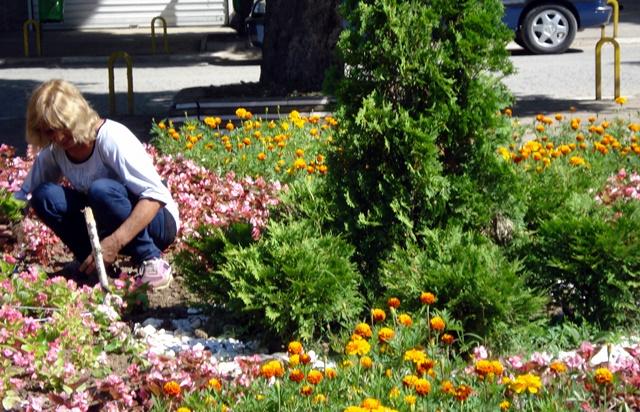 цветя Долни Дъбник