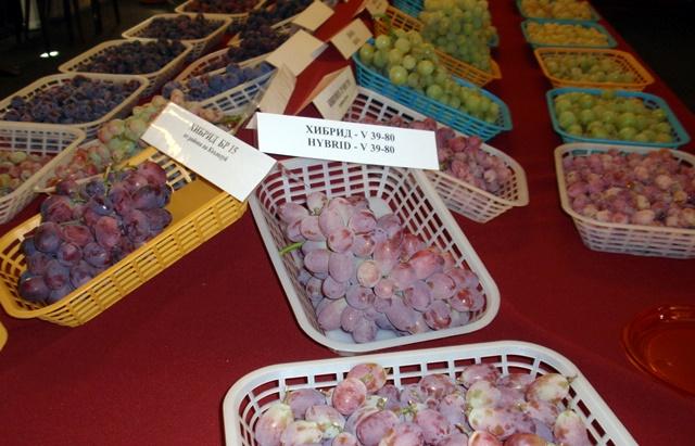 грозде ИЛВ