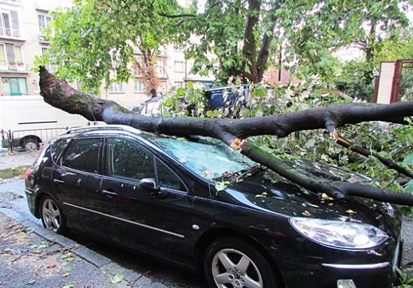 IMG_3076паднало дърво върху кола