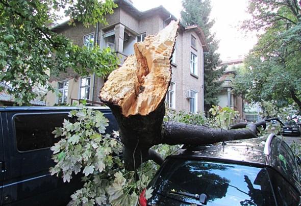 IMG_3078счупено дърво
