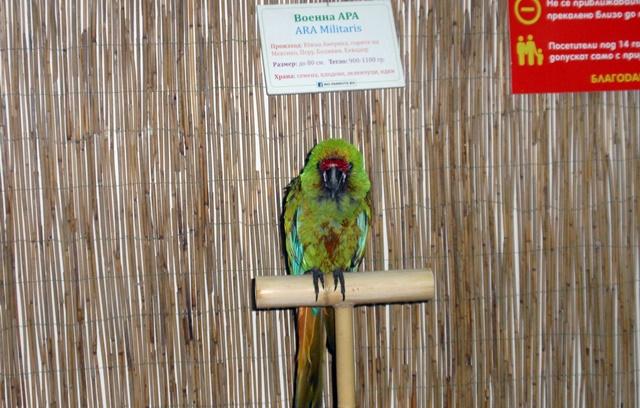 изложба папагали