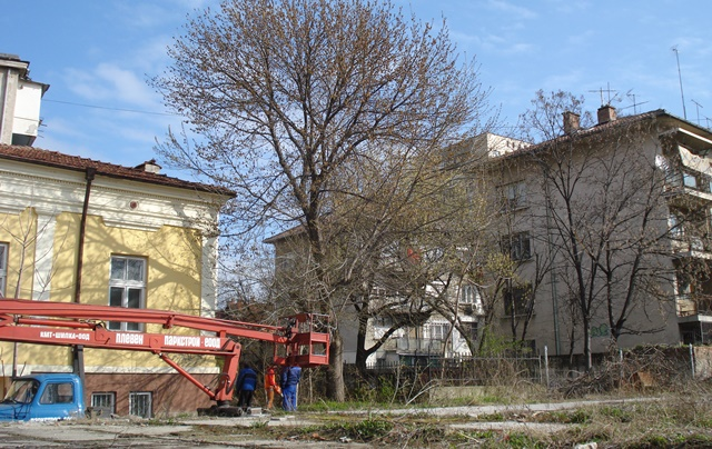 обезопасяване дървета 2