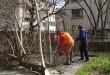 паркстрой кастрене дървета